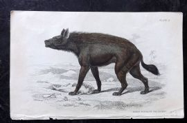 Jardine C1835 Hand Col Print. Naked Hyena of the Desert 27